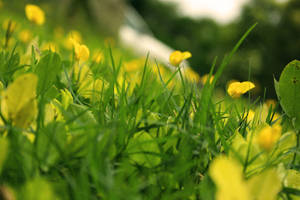 Eternal Bloom by Osox