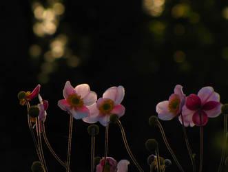 Rain of light by Yanagi-no-Yume