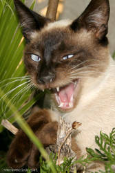 Tragic Cat by vmcampos