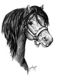 Welsh Pony Head by mammakats