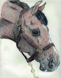 Horse Head by mammakats