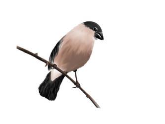 Sketch A Bird by KEvgeny