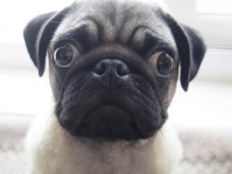 My pup Douglas by creaturekebab