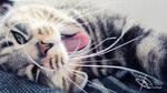 Meow by Swebliss