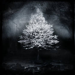 A Light In The Forest by intao