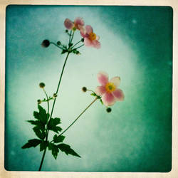 Summers End by intao