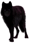 Black Wolf Precut by Illuminicense