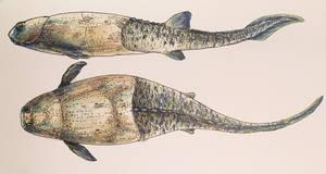Silurolepis by PrehistoryByLiam