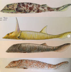 Devonian Osteostracans by PrehistoryByLiam