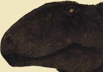 Dimetrodon head detail by PrehistoryByLiam