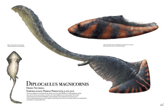 Diplocaulus by PrehistoryByLiam