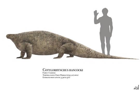 Cotylorhynchus by PrehistoryByLiam