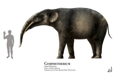 Gomphotherium by PrehistoryByLiam