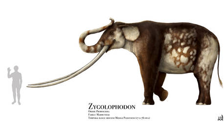 Zygolophodon by PrehistoryByLiam