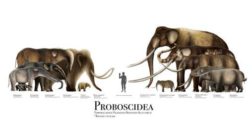 Proboscidea Size Chart by PrehistoryByLiam