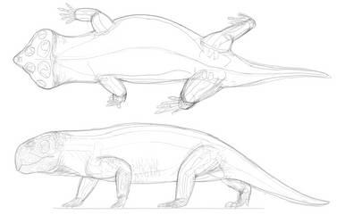 Hyperodapedon sketch by PrehistoryByLiam