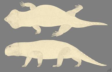 Hyperodapedon Line Drawing by PrehistoryByLiam