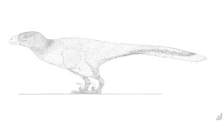 Utahraptor Line Drawing by PrehistoryByLiam