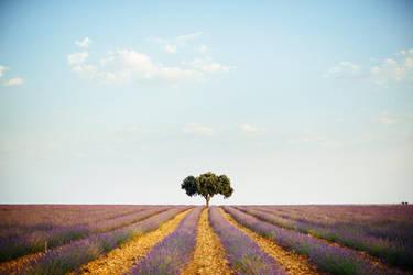 Nature Serenade by 1uno