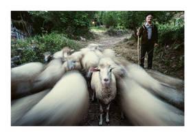 Shepherd by vulezvrk