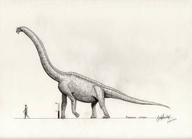Brachiosaurus altithorax by palaeozoologist