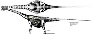 Malawisaurus 2-view skeletal by palaeozoologist