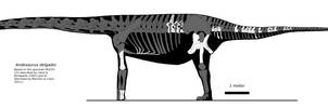 Andesaurus skeletal by palaeozoologist