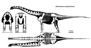Alamosaurus skeletal by palaeozoologist