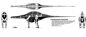 Limaysaurus skeletal by palaeozoologist