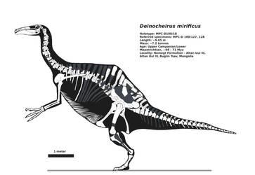 Deinocheirus skeletal by palaeozoologist