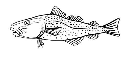 Cod by Jackbounces