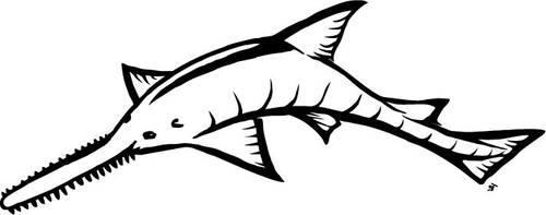 Sawfish by Jackbounces