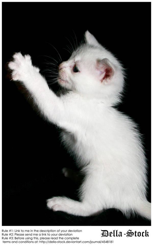 White Kitten Attacks by Della-Stock