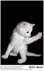 White Kitten Attack by Della-Stock