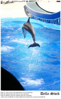 Sea World: Dolphin by Della-Stock