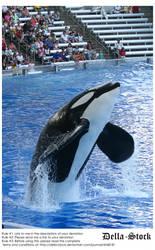 Sea World: Shamu Jump.7 by Della-Stock