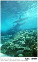 Sea World: Dolphin Cove.3 by Della-Stock