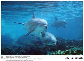 Sea World: Dolphin Cove.4 by Della-Stock