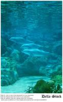 Sea World: Dolphin Cove.5 by Della-Stock