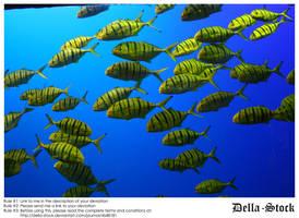 Sea World: Yellow Fish by Della-Stock