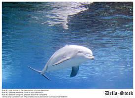 Dolphin Underwater by Della-Stock
