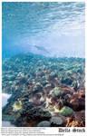Ocean Floor by Della-Stock