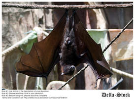 Fruit Bat Wings Front by Della-Stock