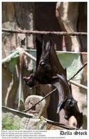 Fruit Bat Hanging by Della-Stock