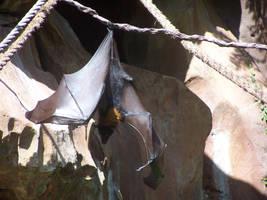 Wings- Bat by Della-Stock
