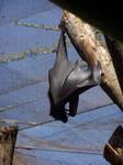 Wing- Bat by Della-Stock