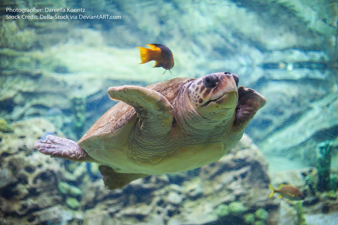 Sea Turtle by Della-Stock