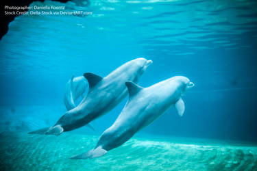 Underwater Dolphins by Della-Stock