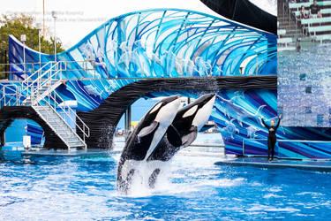 Double Orca Breach by Della-Stock