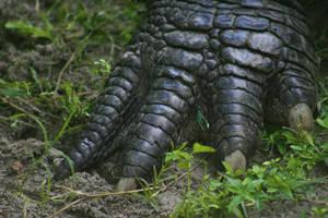 Gator Claw by Della-Stock